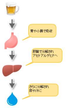 アルコールが体内で分解される仕組み