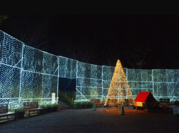 アルプスあづみの公園クリスマスツリー