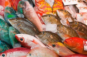カラフルな魚お土産