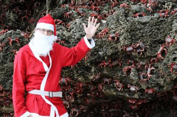 サンタクロースが蟹の岩場で手を振る