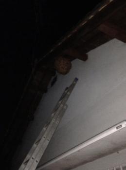 スズメバチ巣駆除時間