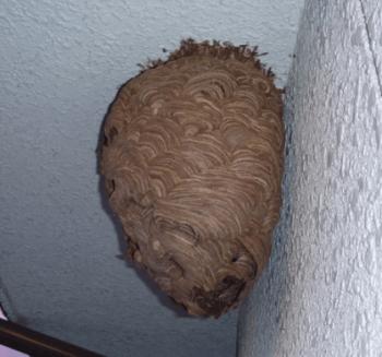 スズメバチ巣駆除