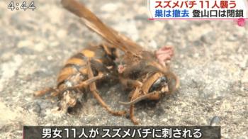 スズメバチ駆除ニュース