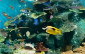 トロピカルフィッシュお魚沖縄