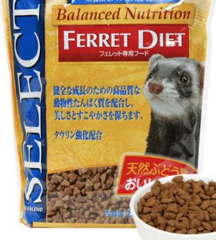 フェレット餌