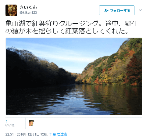 亀山湖野生猿紅葉