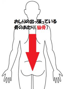 仙骨の位置