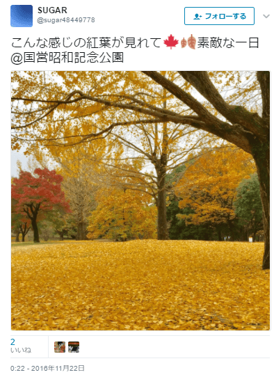 国営昭和記念公園きれい紅葉