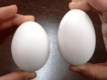 普通の卵と二黄卵の見分け方