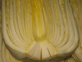 根に切込みを入れた白菜