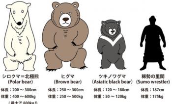 熊の大きさ