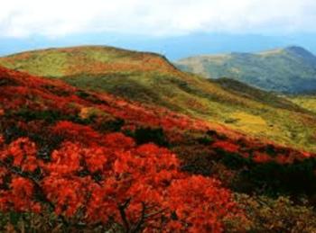 神々の絨毯きれい紅葉栗駒山