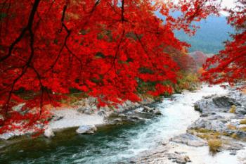 秋川渓谷紅葉