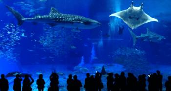 美ら海水族館巨大水槽