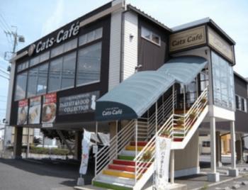長野市で子連れにおすすめのキャッツカフェ