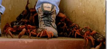靴の近くにアカガニがいる