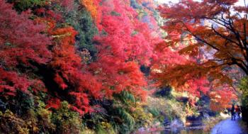 養老渓谷千葉紅葉おすすめ