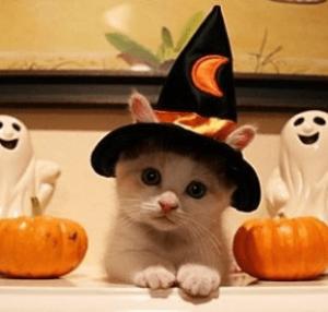 ハロウィン仮装猫メイク100均top