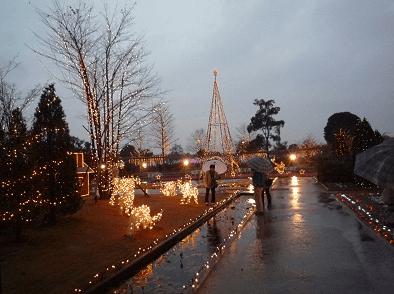 あしかがフラワーパークイルミネーション2016混雑雨
