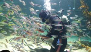 サンピアザ水族館お魚ショー