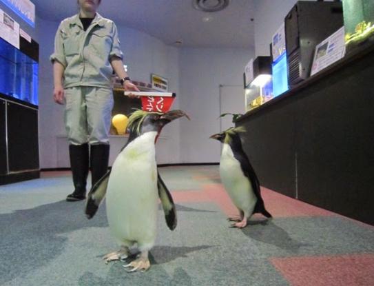 サンピアザ水族館ペンギン案内
