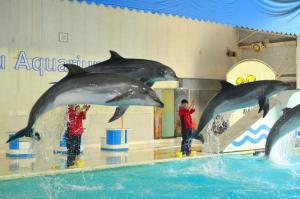 北海道おすすめ水族館イルカショー