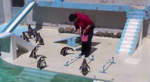 北海道おすすめ水族館自由気ままなペンギン