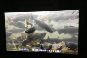 千歳水族館水中観察ゾーン日本初