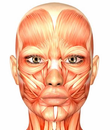 顔のたるみ筋肉50種類