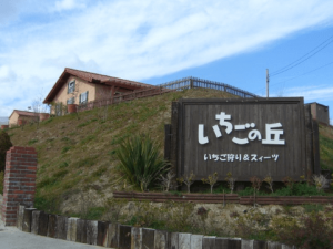 イチゴ狩り愛知県人気ランキングいちごの丘