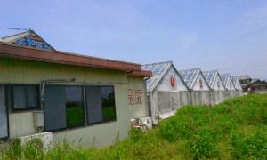 イチゴ狩り愛知県人気ランキングらんらんいちご園