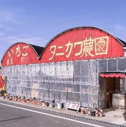 イチゴ狩り愛知県人気ランキングタニカワ農園