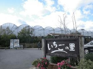 イチゴ狩り愛知県人気ランキング南知多いちごの里