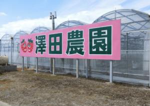 イチゴ狩り愛知県人気ランキング澤田農園