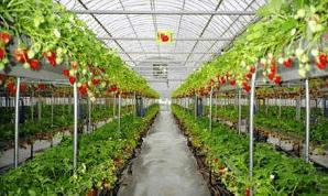 イチゴ狩り愛知県人気ランキング蒲郡オレンジパーク2