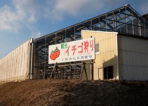 広島県イチゴ狩りランキング2017恵みの丘蒲刈