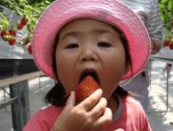 広島県イチゴ狩りランキング2017沖美ベジタ