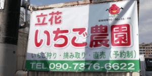 広島県イチゴ狩りランキング2017立花いちご農園