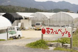 広島県イチゴ狩りランキング2017苺ファームべりふる2