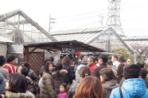 神奈川いちご狩り人気ランキング2017ストロベリーハウス混雑