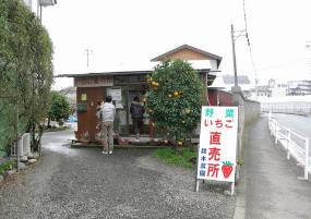 神奈川いちご狩り人気ランキング2017鈴木農園2