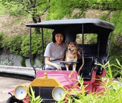 西武園ゆうえんちイルミネーション2016犬入場