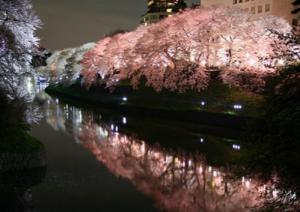 ライトアップ隅田公園桜