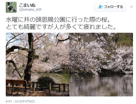井の頭公園桜口コミ