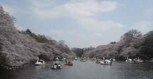 桜ボート井の頭恩賜公園