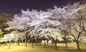 飛鳥山公園ライトアップ
