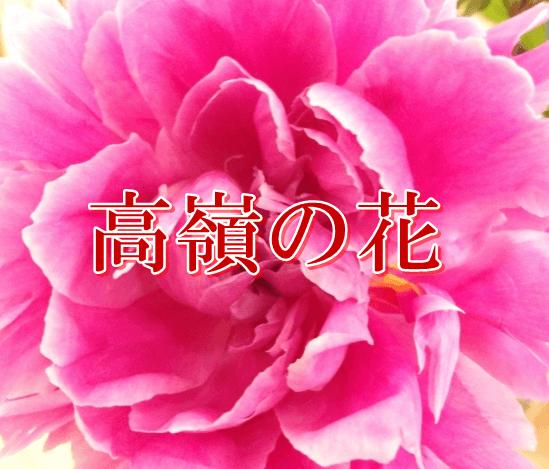 高嶺の花アイキャッチ
